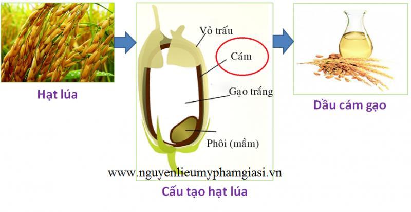 dau-cam-gao-4-1537947467.png