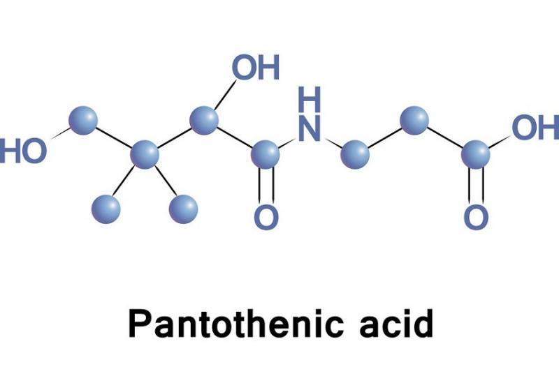 Vitamin B5 (Pantothenic acid) – Cung cấp Vitamin B5 giá sỉ trên toàn quốc