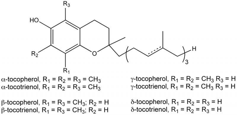 vitamin-e-gia-si-1-1538124424.png